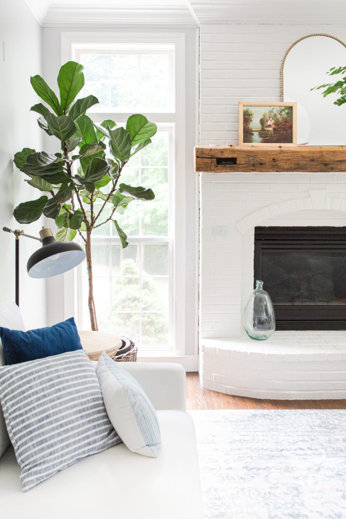 How to Care for a Fiddle Leaf Tree